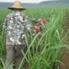 小型开沟培土机多少钱一台开沟培土机的价格小型培土机多少钱